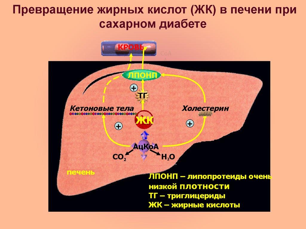 Инсулиназа