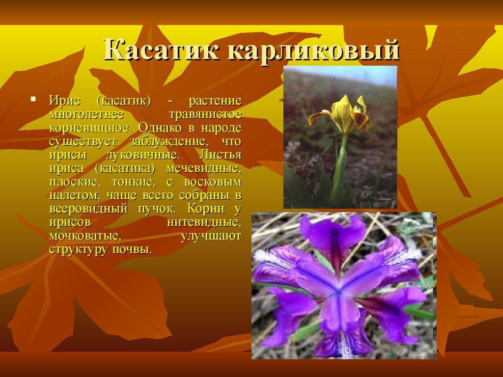 Растения занесенные в Красную книгу Краснодарского края