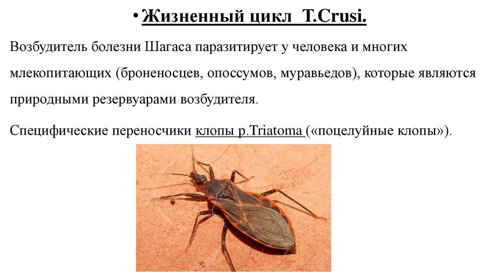 от простейших паразитов