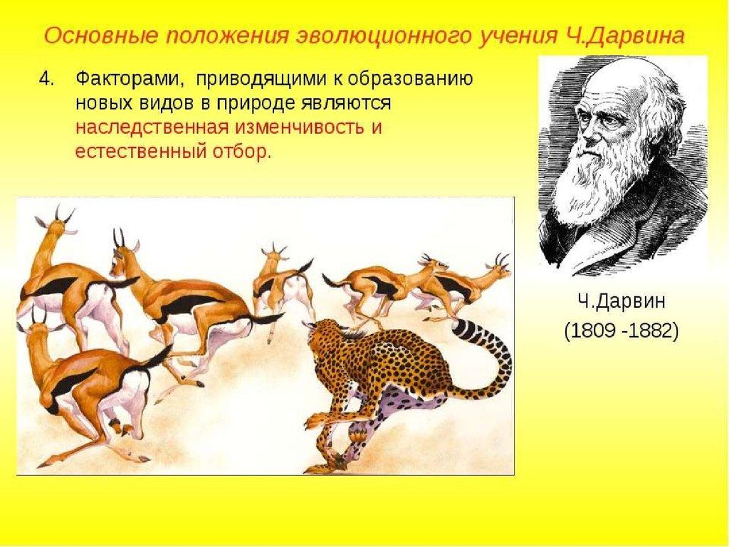 Урок конспект основные положения эволюционной теории дарвина