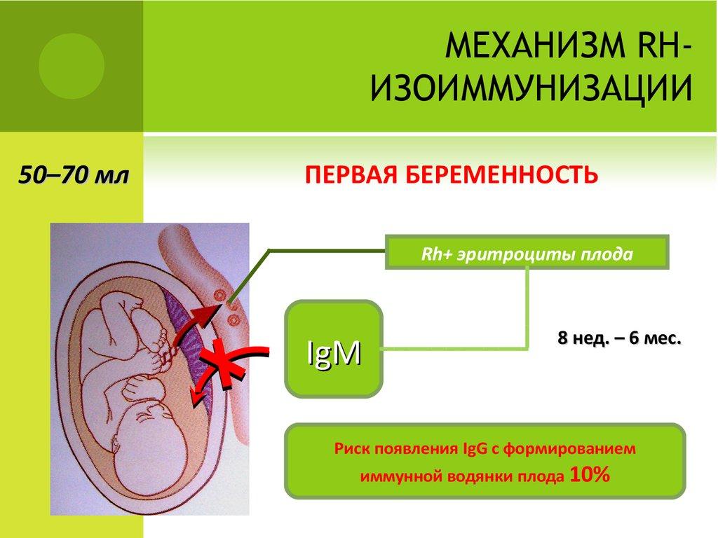Изоиммунизация