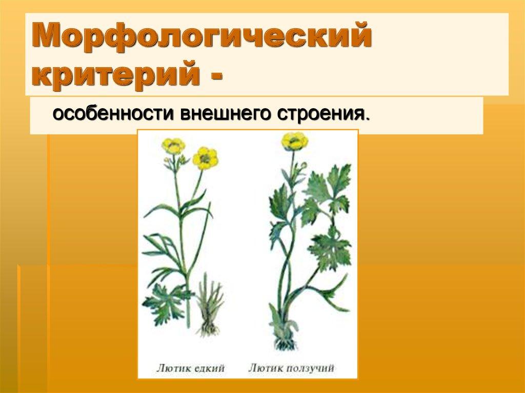 назовите знакомые вам виды растений