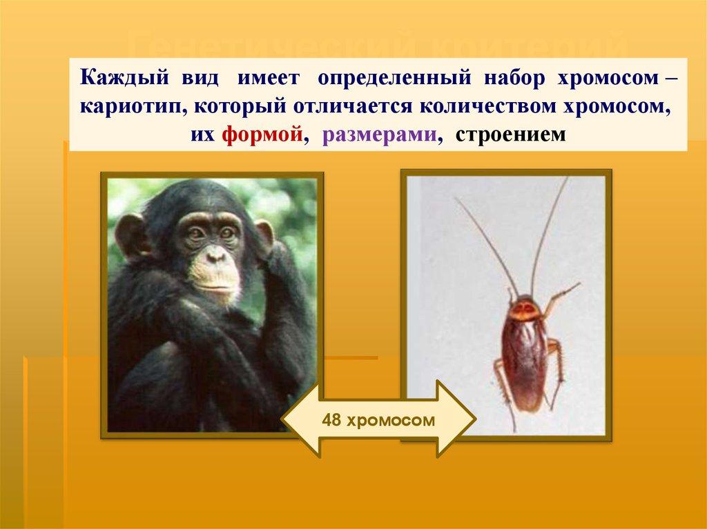 назовите знакомые вам виды растений и животных