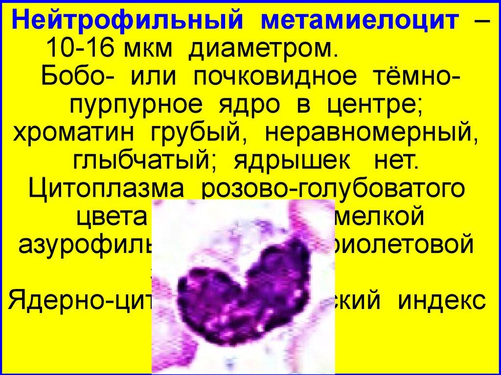 Метамиелоцит
