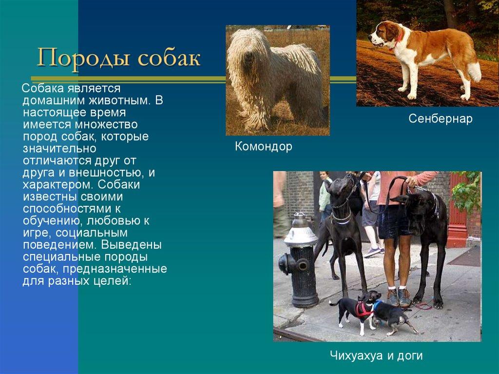 породы собак презентация для детей