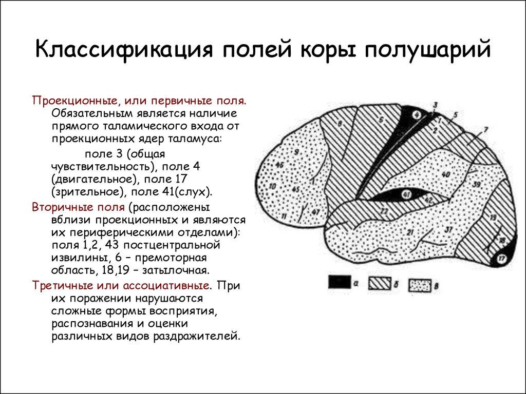 статины классификация механизм
