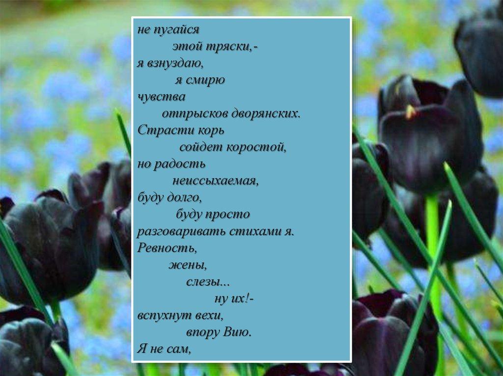 Стих поэта тютчева