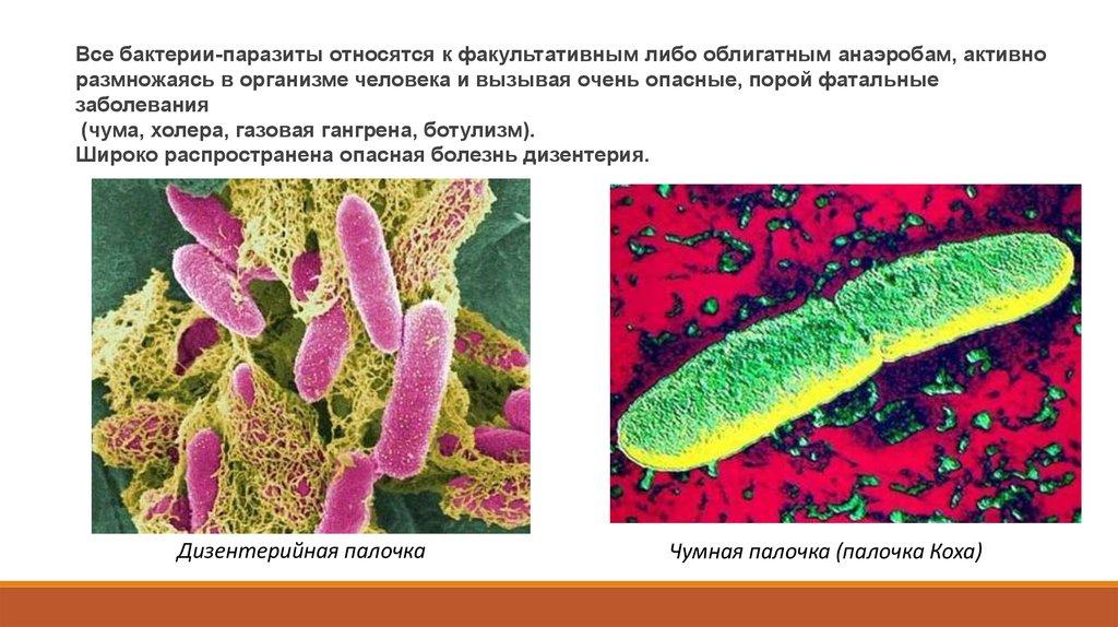 паразиты живущие в человеке видео
