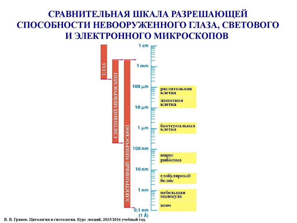 Шкала Гистологическая