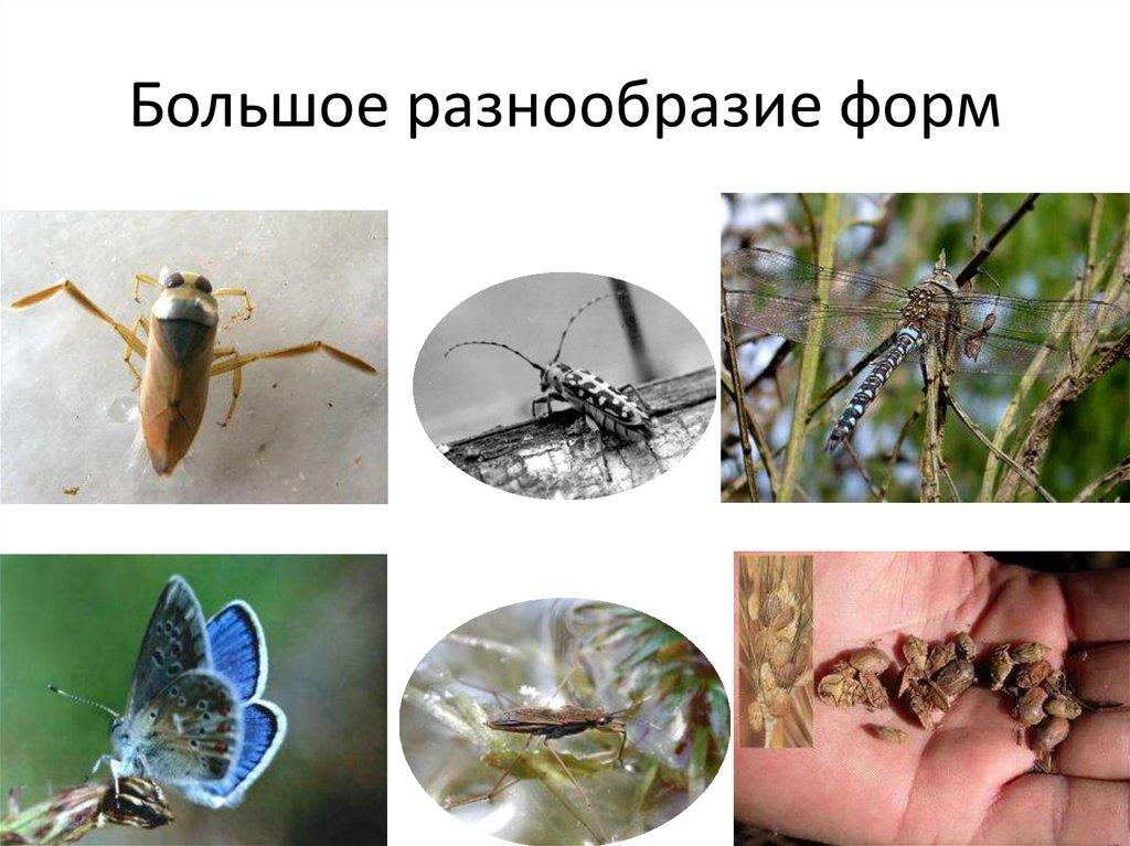 постоянные паразиты человека