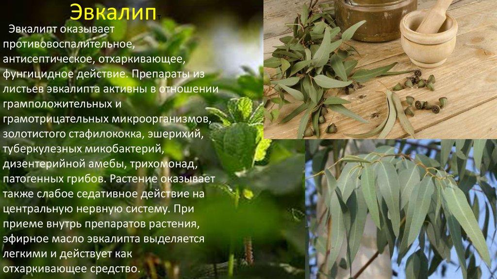 растительные средства против паразитов