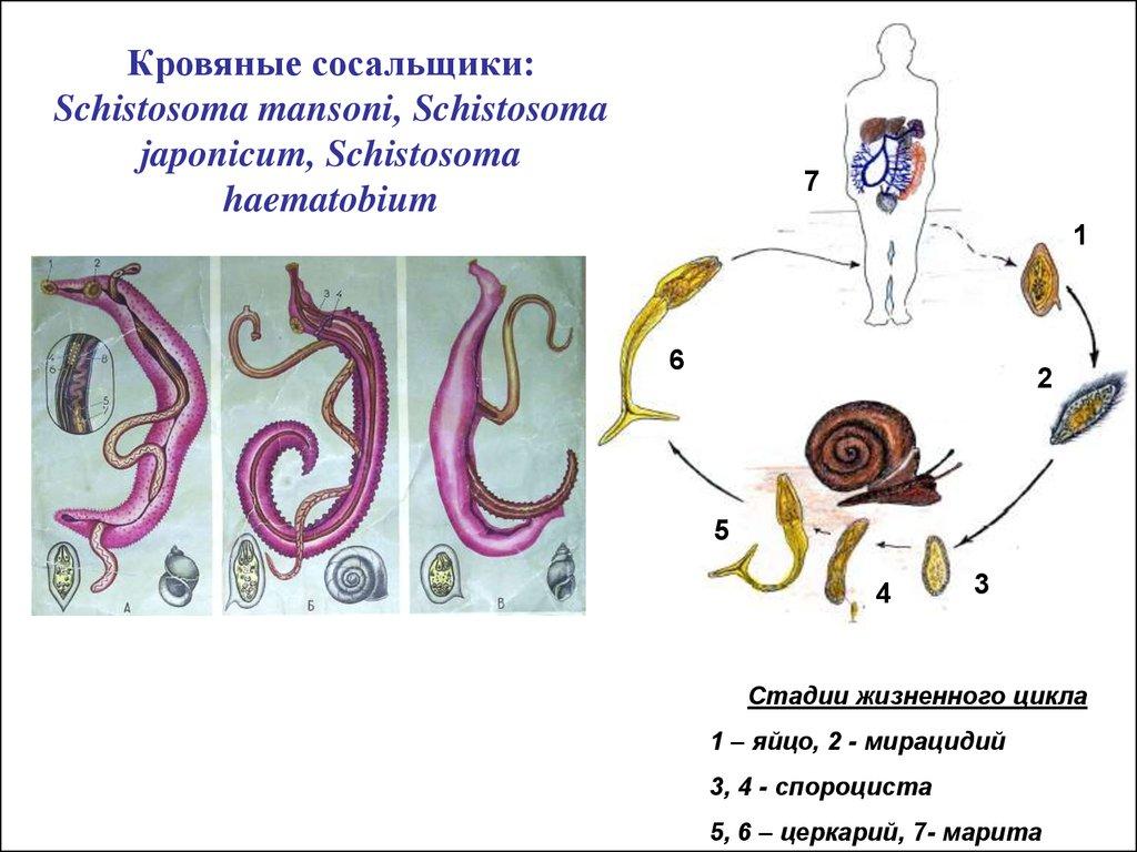 атлас паразитов человека скачать