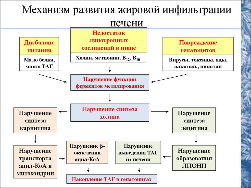 уровень лпнп в крови норма у женщин