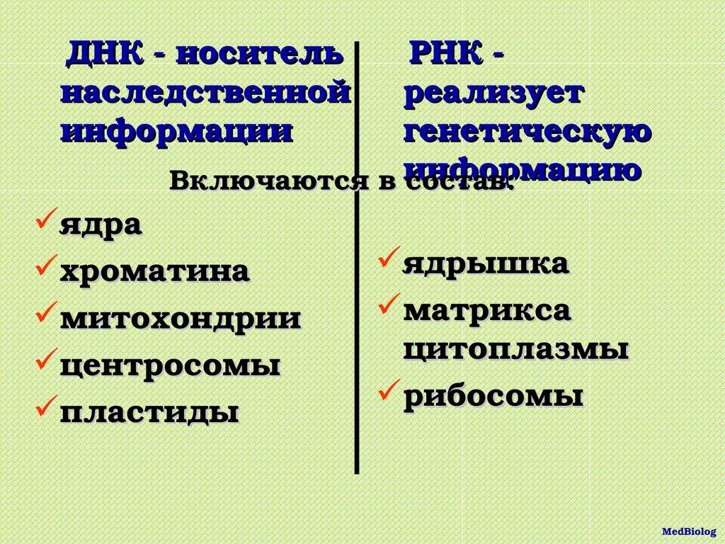 КЛЕТКИ.Митохо́ндрия