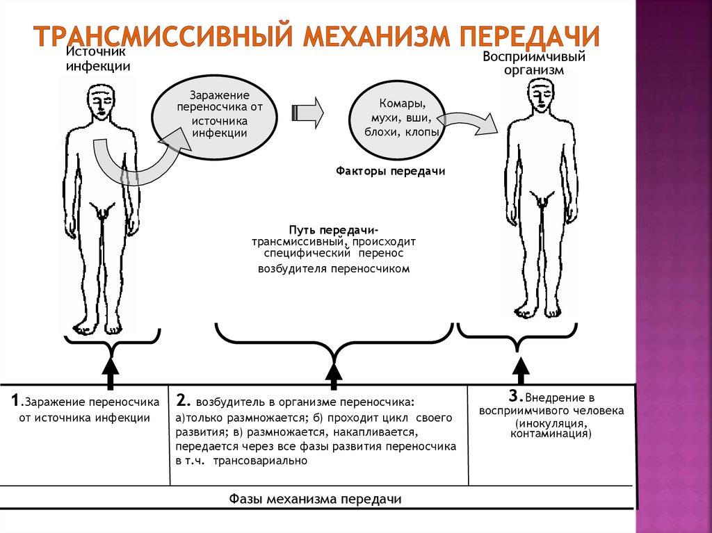 stagnation definition biologie