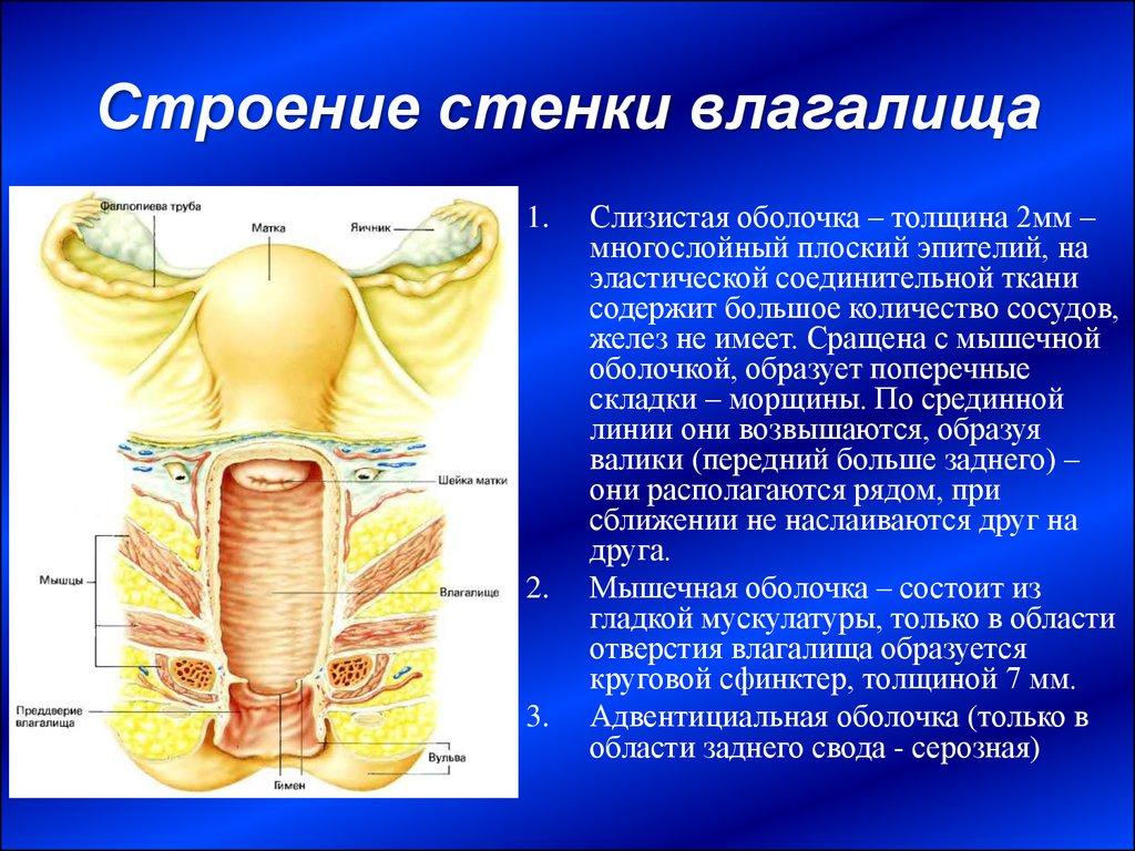 pulsiruyushee-vlagalishe-russkih-devushek-smotret-foto-video