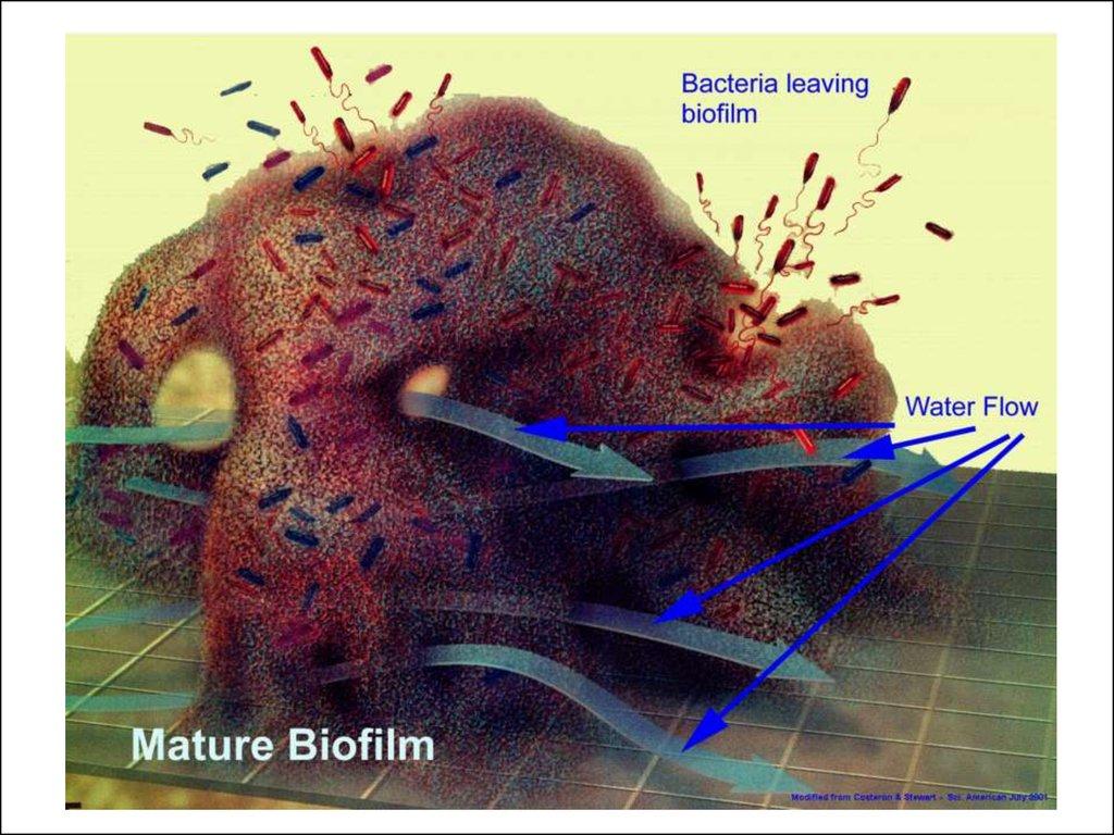 профилактика от червей паразитов в организме человека