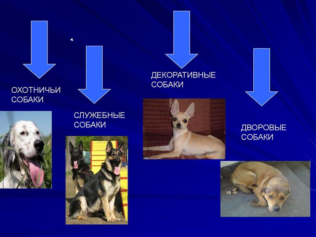 Учебник по истории россии 8 класс данилов косулина фгос читать онлайн