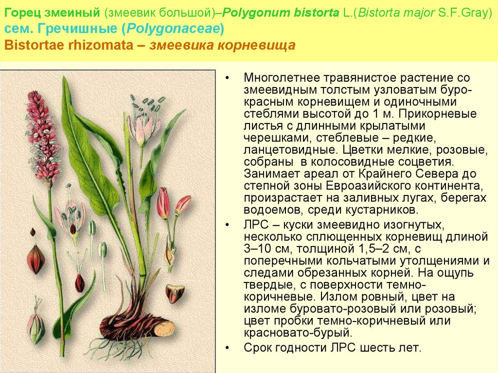 Цветок змеевик