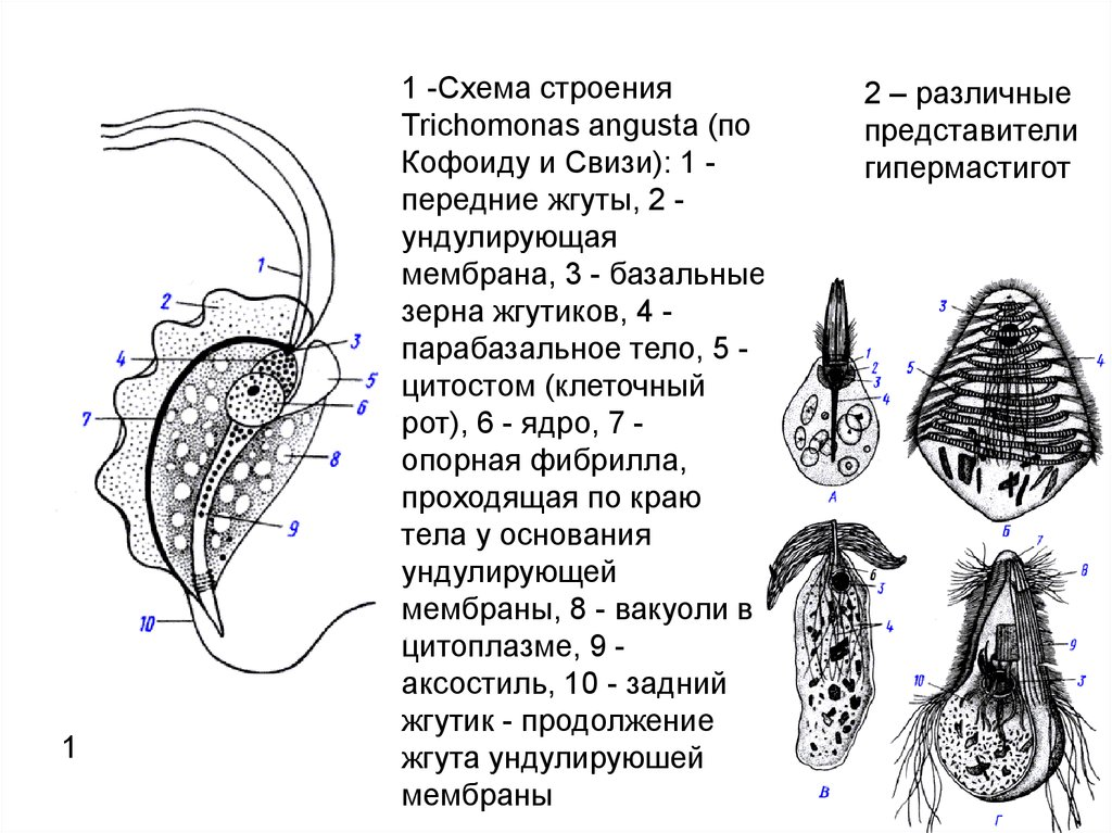 Название лекарства от глистов у взрослых image 4