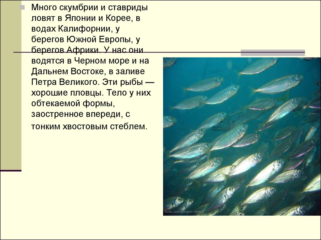 как ловить рыбу скумбрию