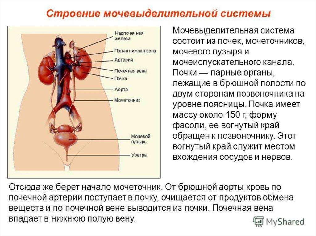download Молодежная политика: генезис, состояние,