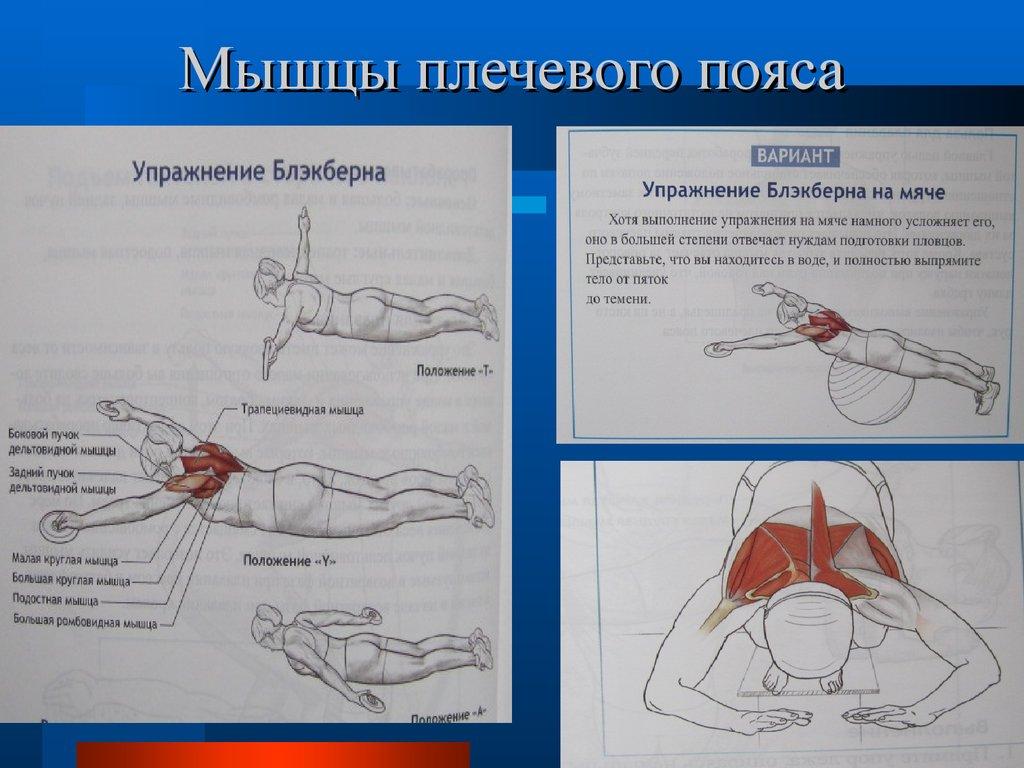 упражнения для коксартроза плечевого сустава