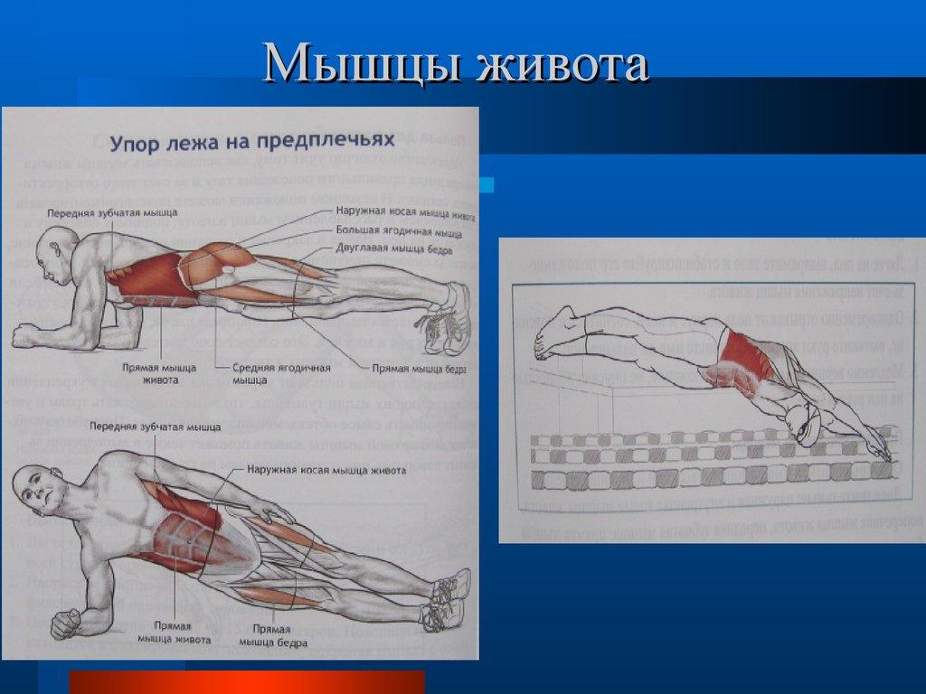 плавание какие мускулы работают
