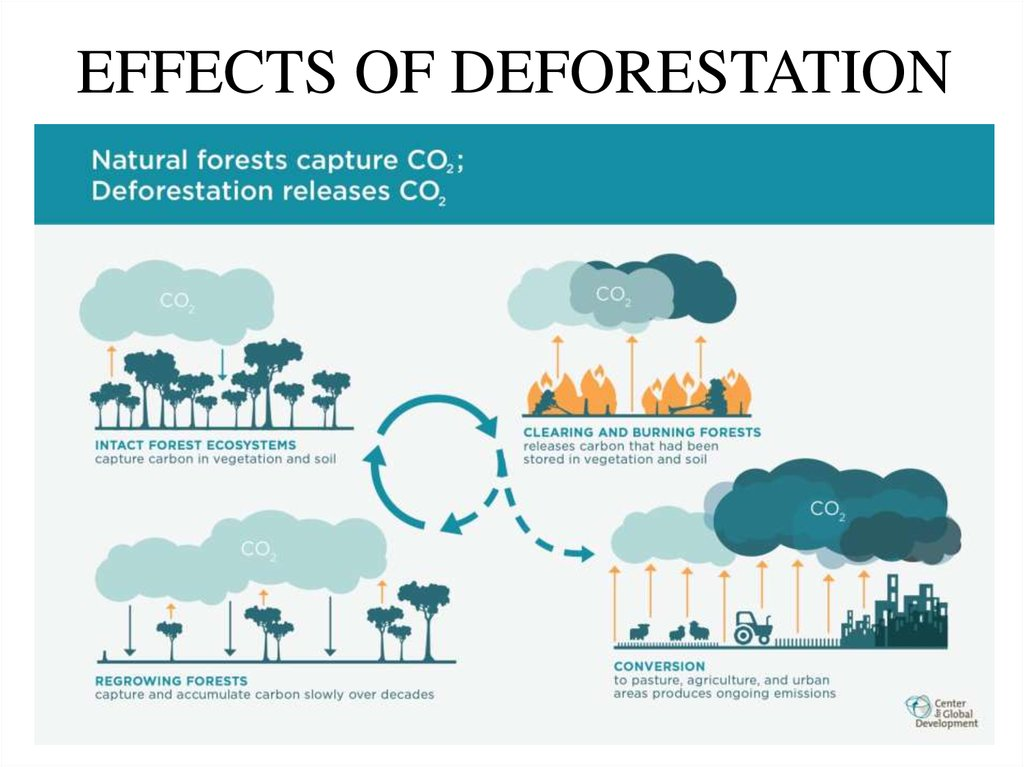 effects on the environment due to deforestation in the world Effects of deforestation environmental effects of deforestation from above with fewer trees left, due to deforestation.