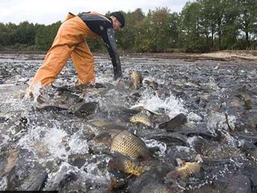 вакансии в рыбхозах московской области белую