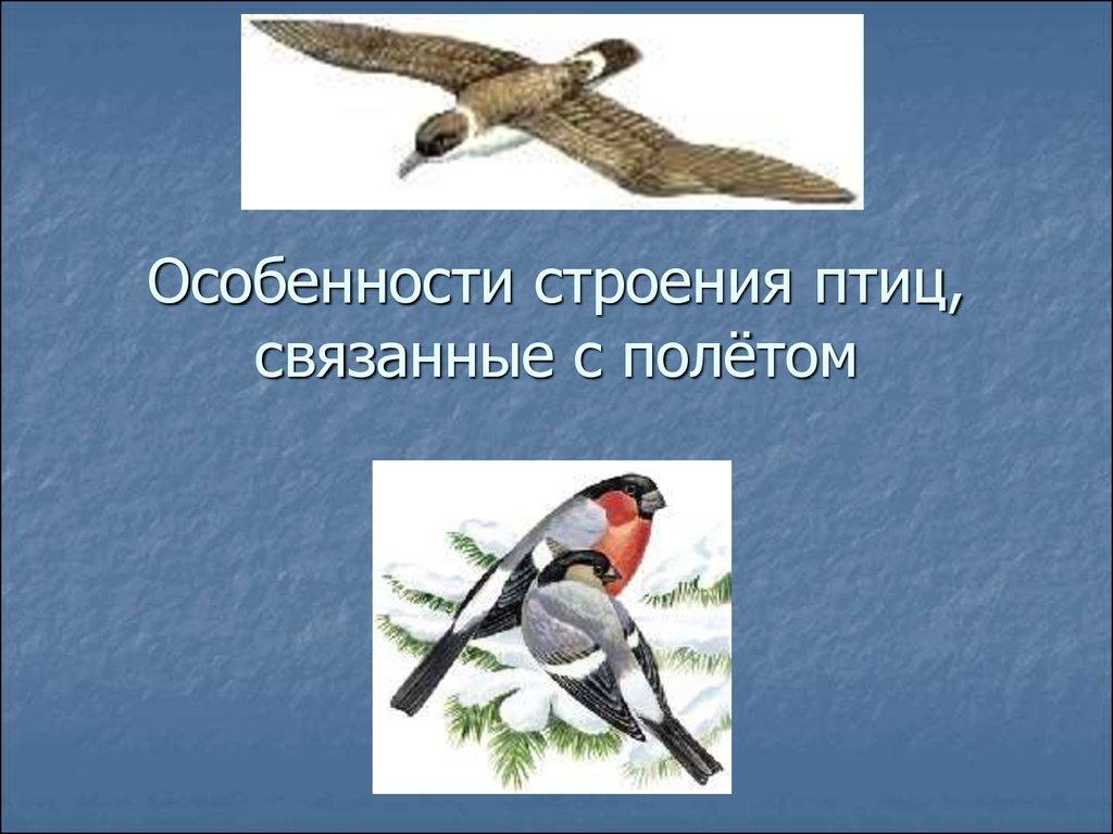 Особенности полёта птиц с чем эти особенности