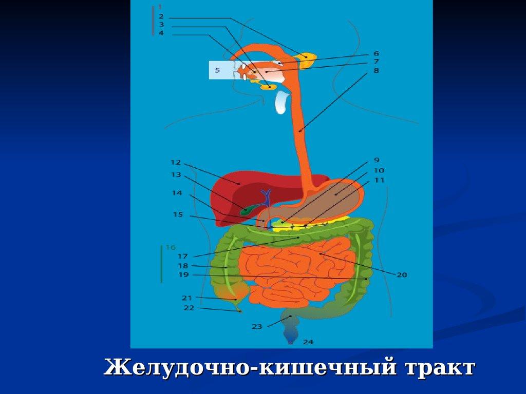Болит пищевод отрыжка ком в горле