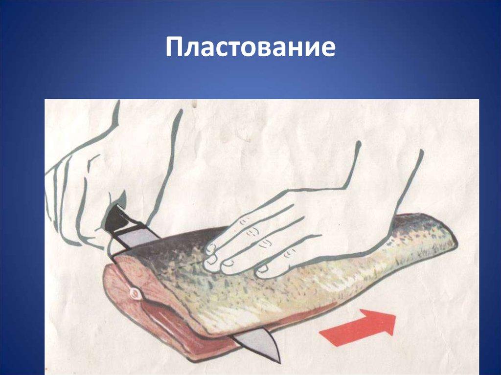очистка организма от паразитов в домашних