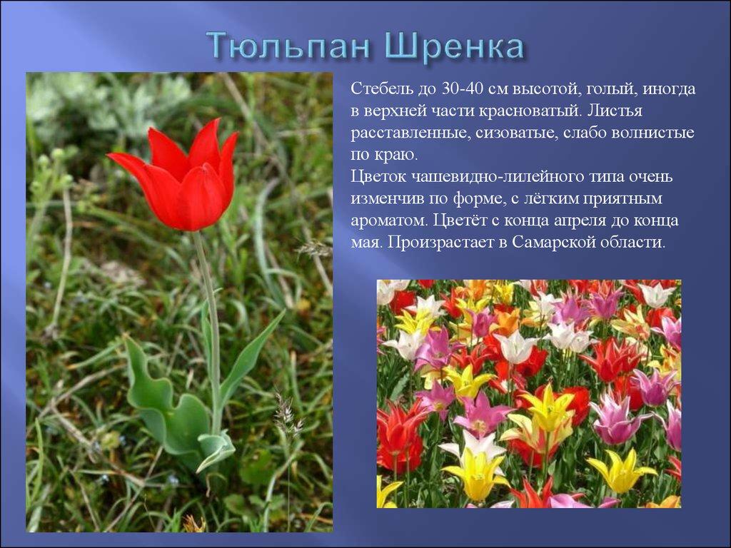 Красная книга цветов Библиотека цветов