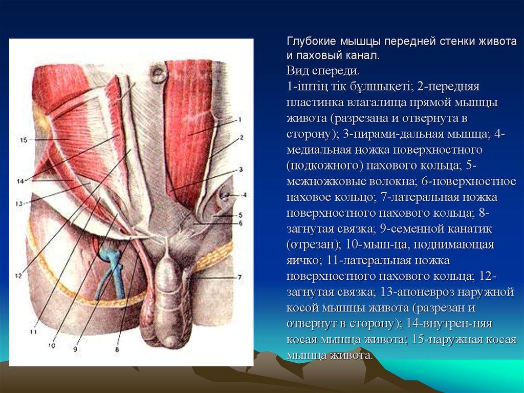 peredney-stenke-vlagalisha