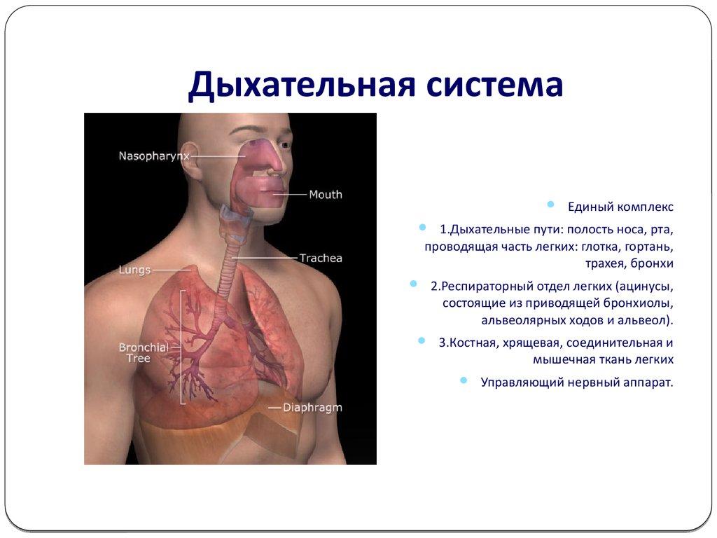 презентация очищение организма