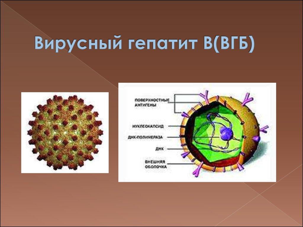 Хронический гепатит в у беременности