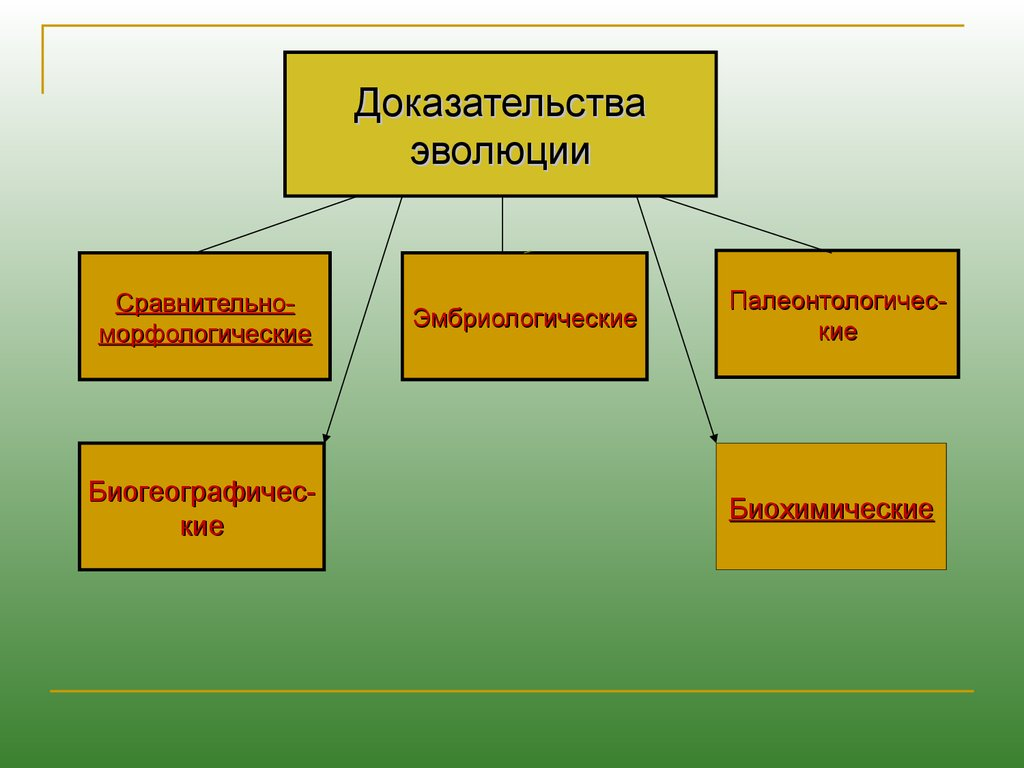 восточная биогеографическая область презентация