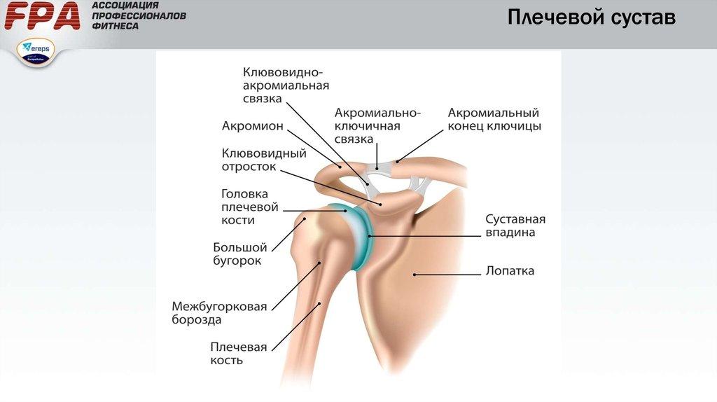 Как сделать плечевой сустав 117