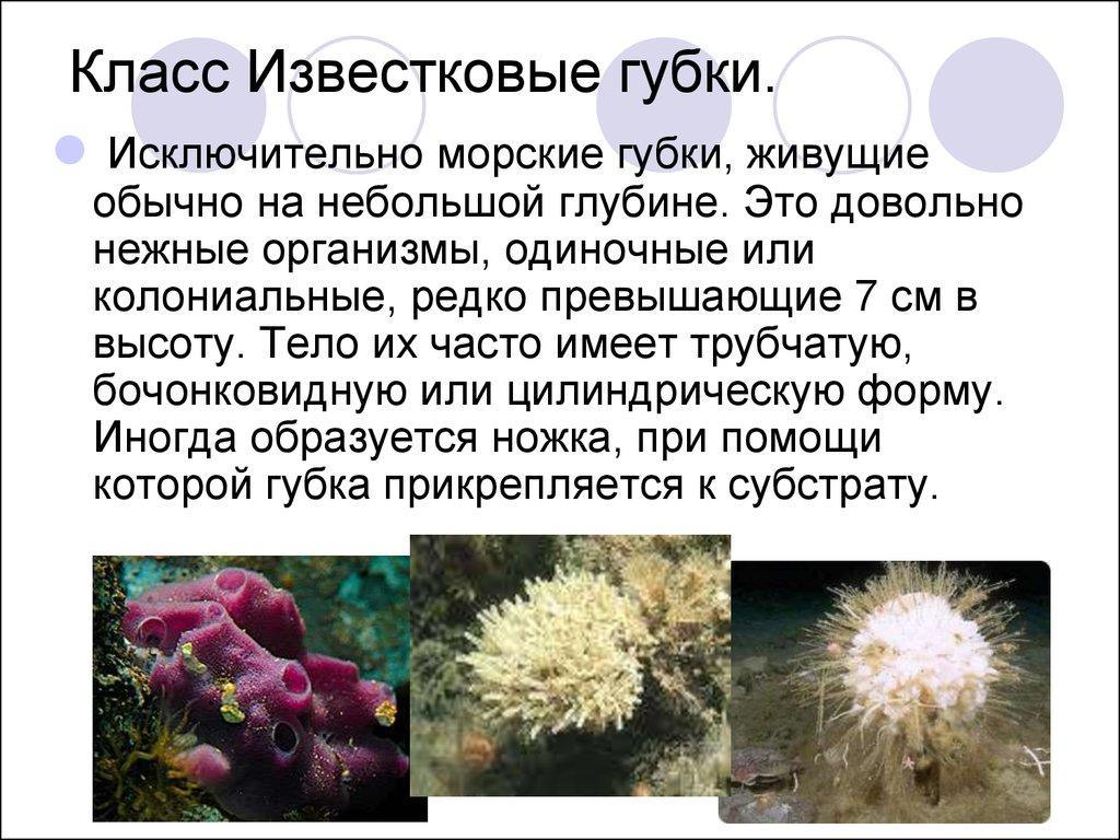 знакомство с одноклеточными организмами 5 класс