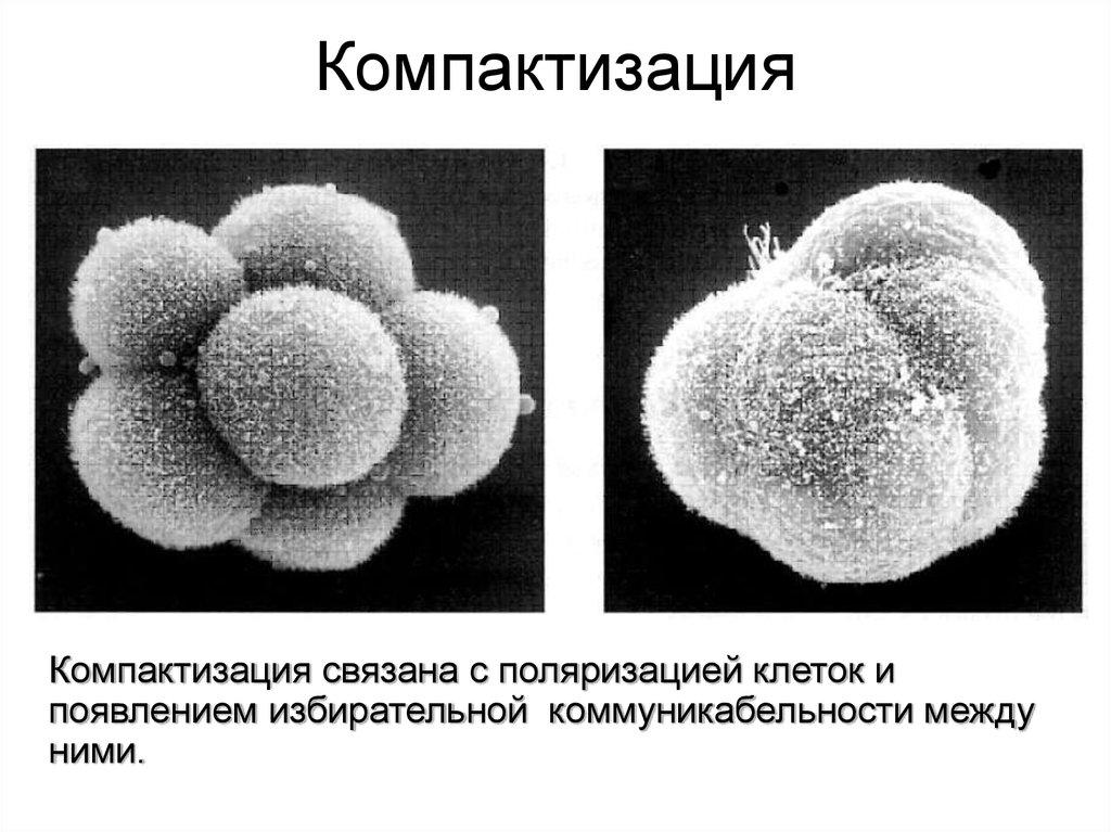 prodolzhitelnost-zhizni-spermatozoidov-cheloveka