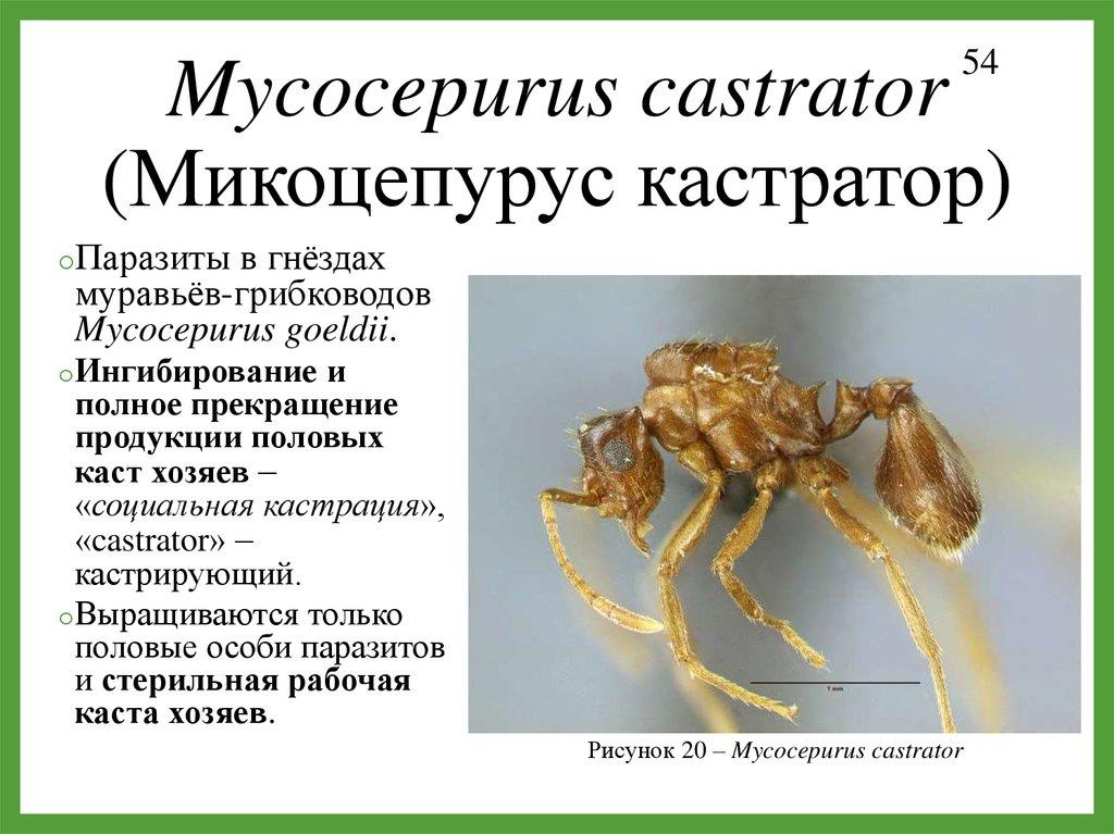 институт паразитов имени пирогова