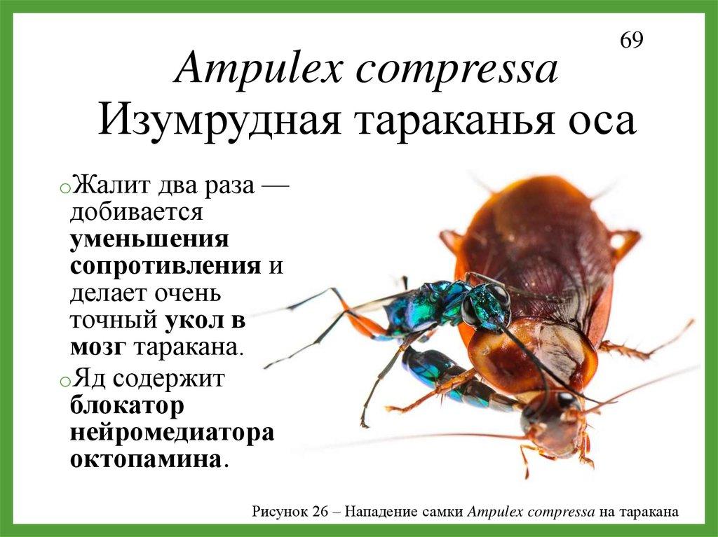 институт паразитологии bactefort