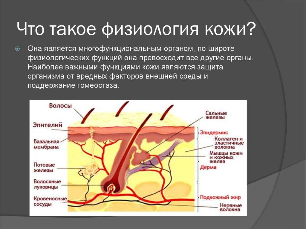 причины повышения холестерина в крови у женщин