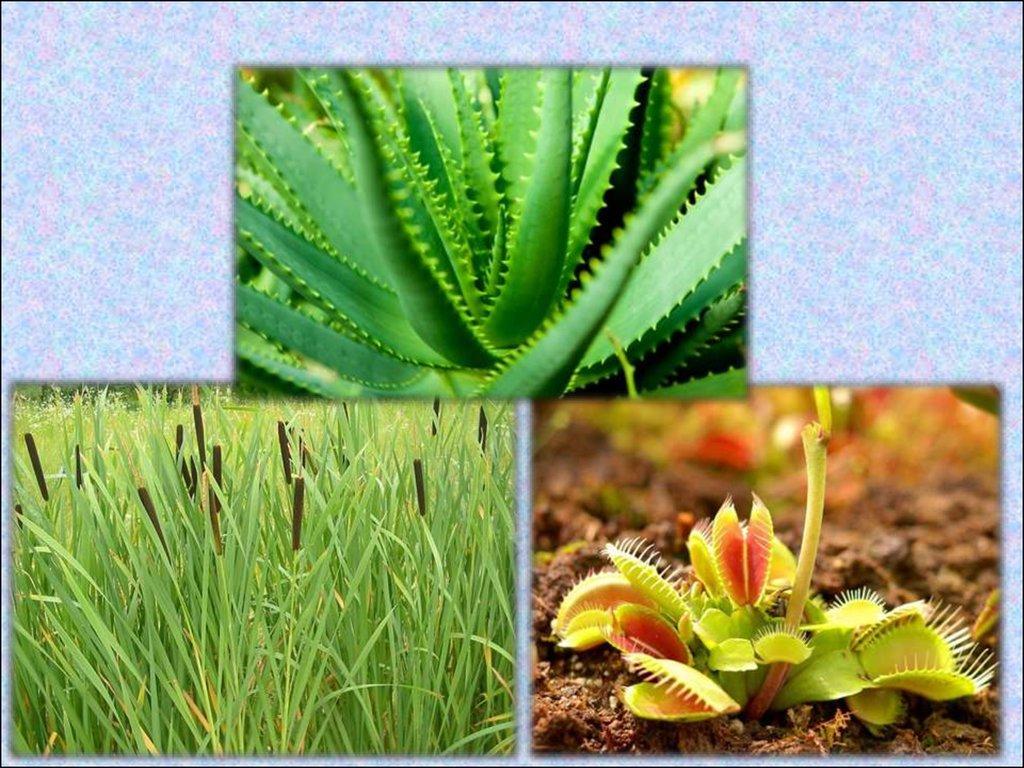 Фотосинтез. Опыты - презентация онлайн: http://ppt-online.org/106174