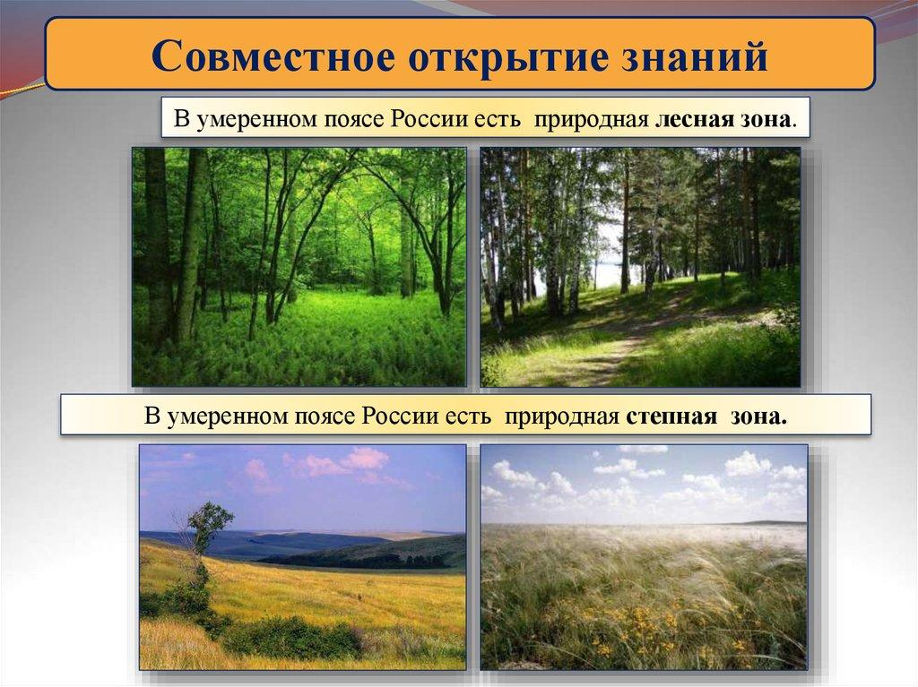 Презентация по теме природныезоны мира 1-4 класс
