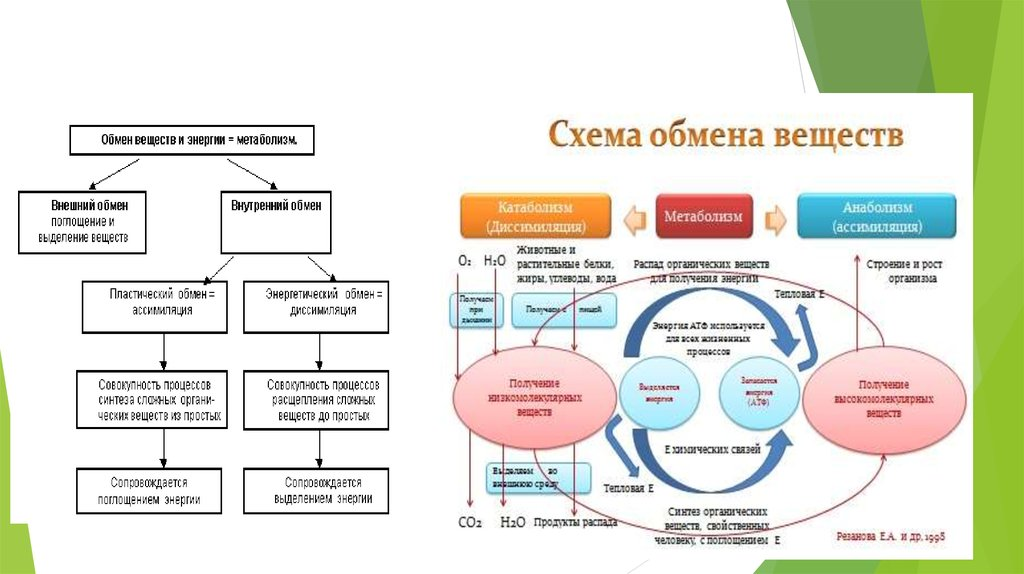 организм как биологическая система