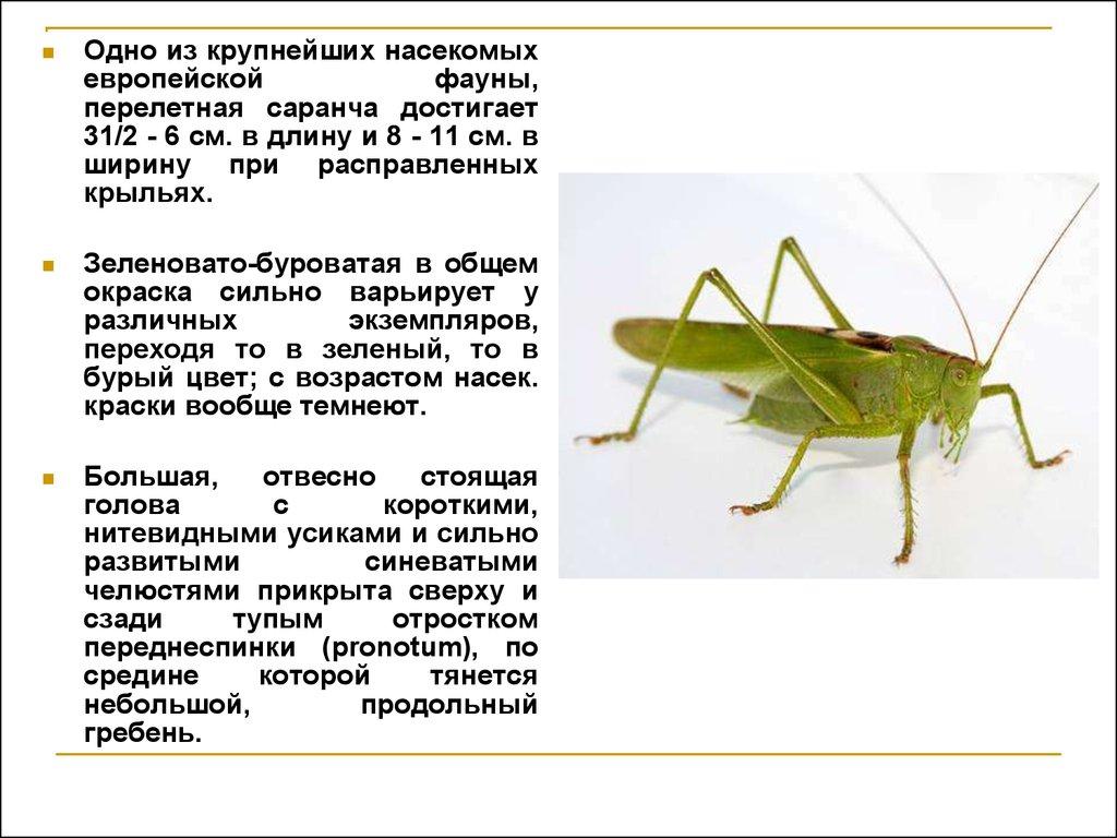 презентация 1 класс технология насекомые