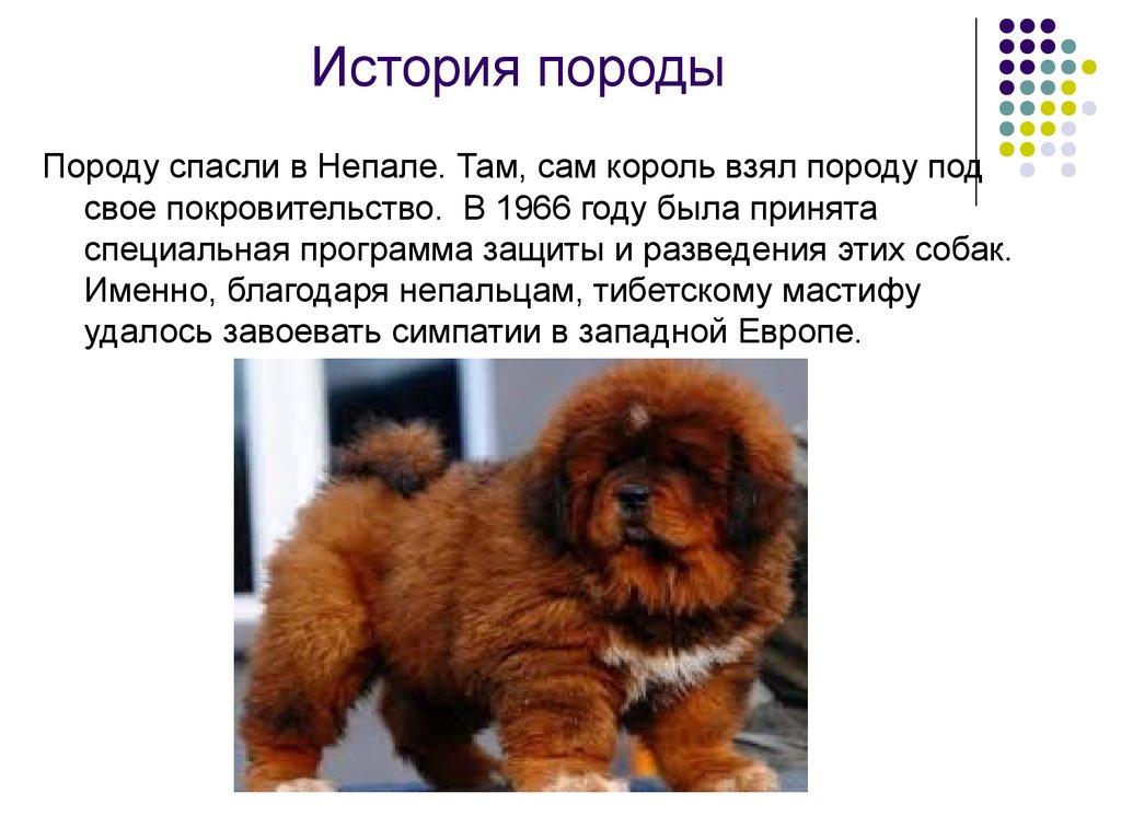 происхождение собаки от волка презентация детям