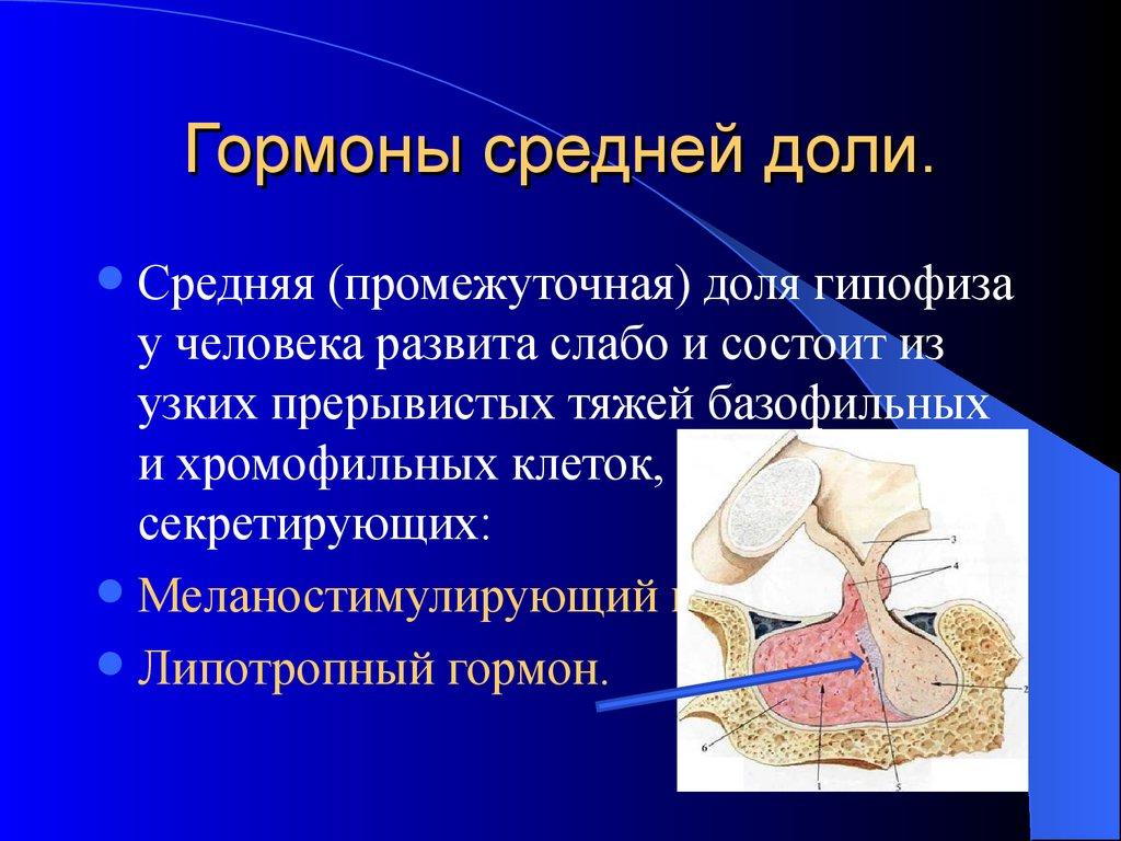 гормоны либерины статины